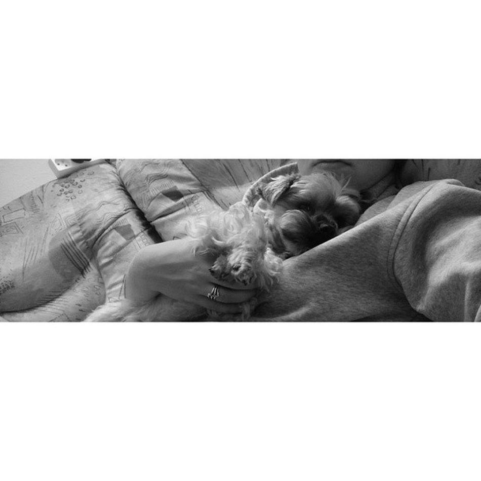 největší zlato ❤ My Dog Kámoš Sleep goodtime love evening