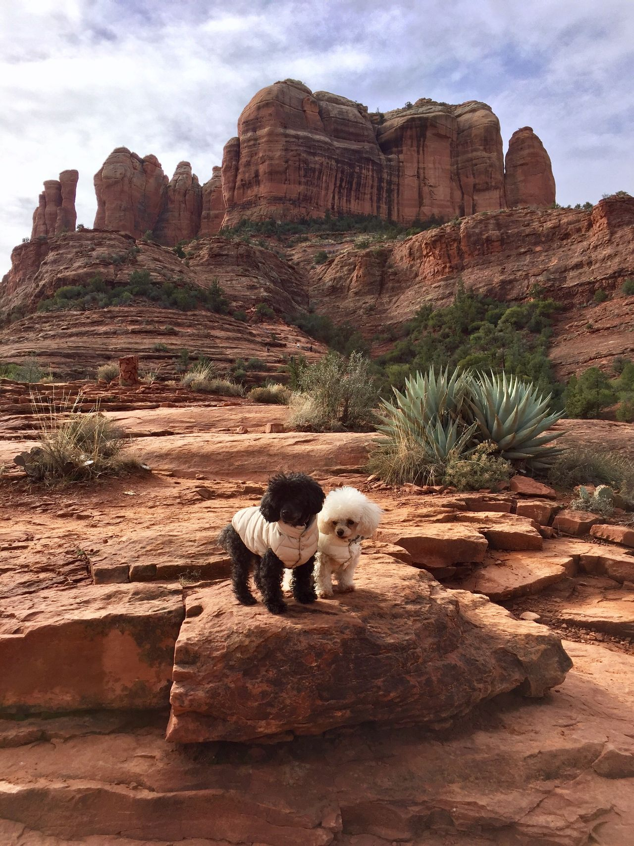 Rock Formation Geology Nature Dogs Sedona