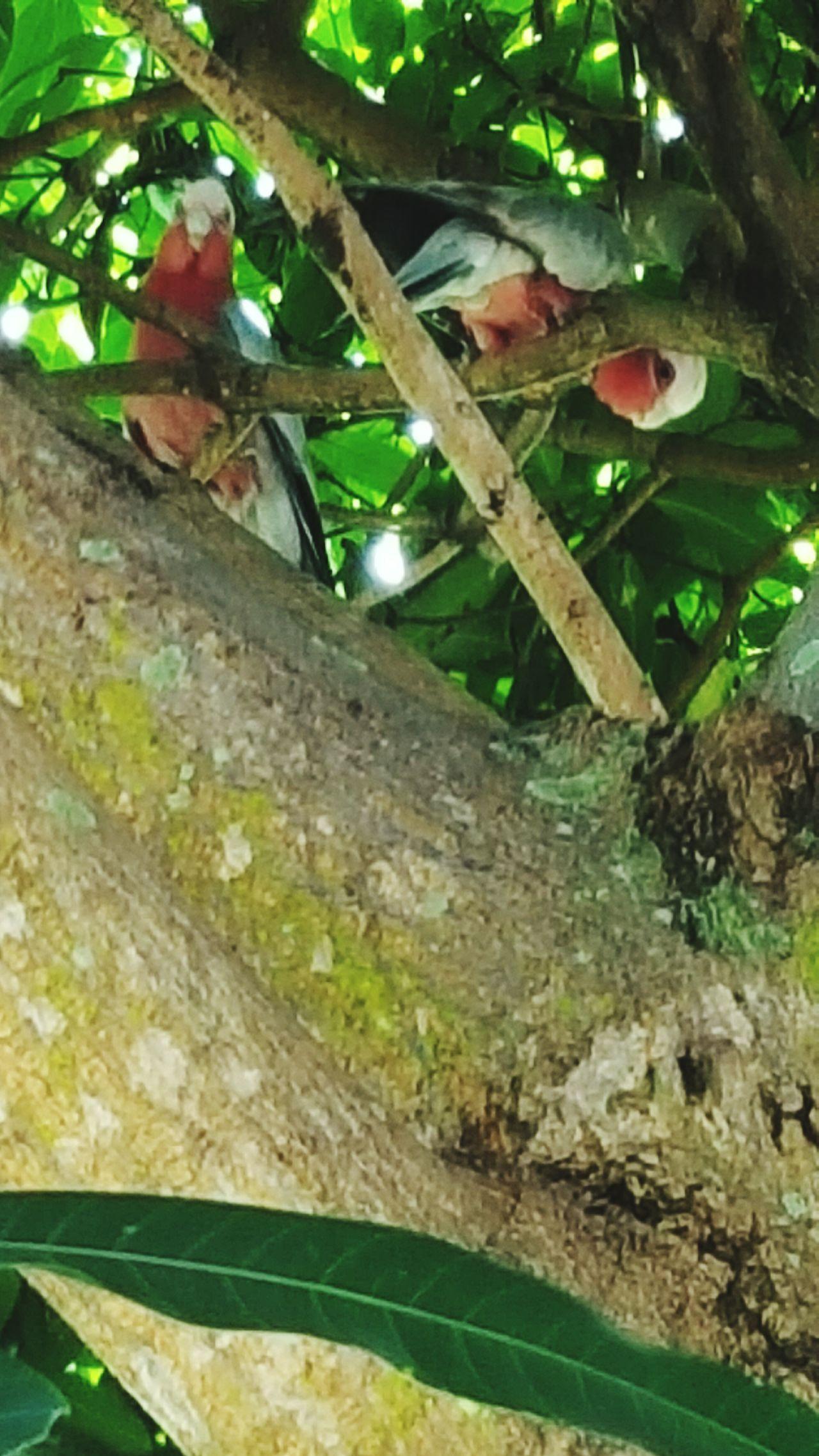 Birds Wildlife Birds🐦⛅ In Tree Birds_n_branches Animals No People 😇😇😇 Birds Looking At Me Taken Picture Enjoying Nature