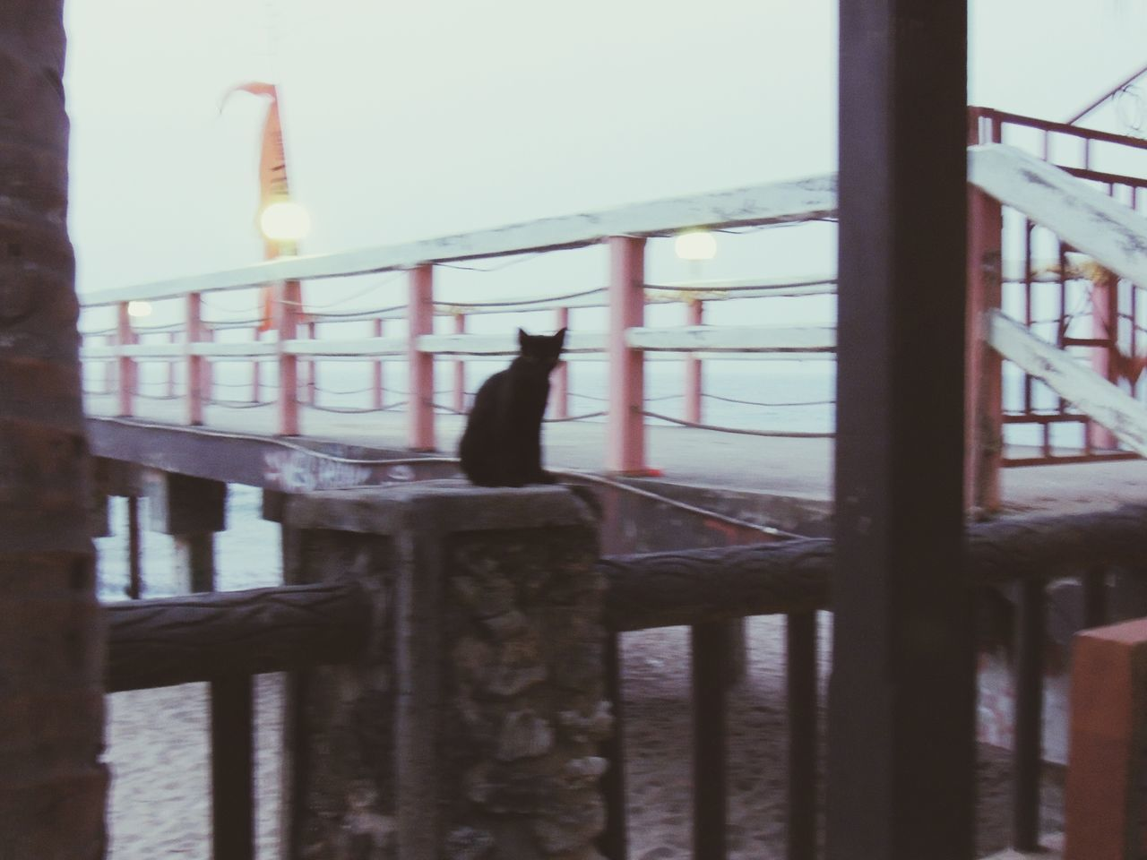 obey me. ikuti perintah ku. INDONESIA Naturelovers EyeEm Nature Lover Nature_collection Pantai Anyer Anyerbeach First Eyeem Photo Cats Kitty Showcase: December Missions