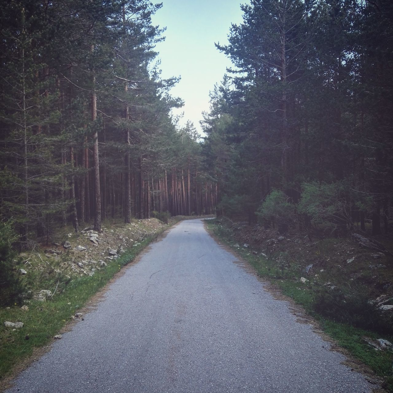 Lonely way. During a pleasant walk through the mountain we find with this abandoned road. The Essence Of Summer Trees Forest Landscape Nature Mountain Road Abandoned Abandoned Road Life Is Beautiful Awesome Places Huawei HuaweiP8 Photooftheday Feel The Journey Segovia SPAIN Sierra De Guadarrama Valsaín Naturelovers Fine Art Photography Travel Lonelyplanet Showcase June On The Way