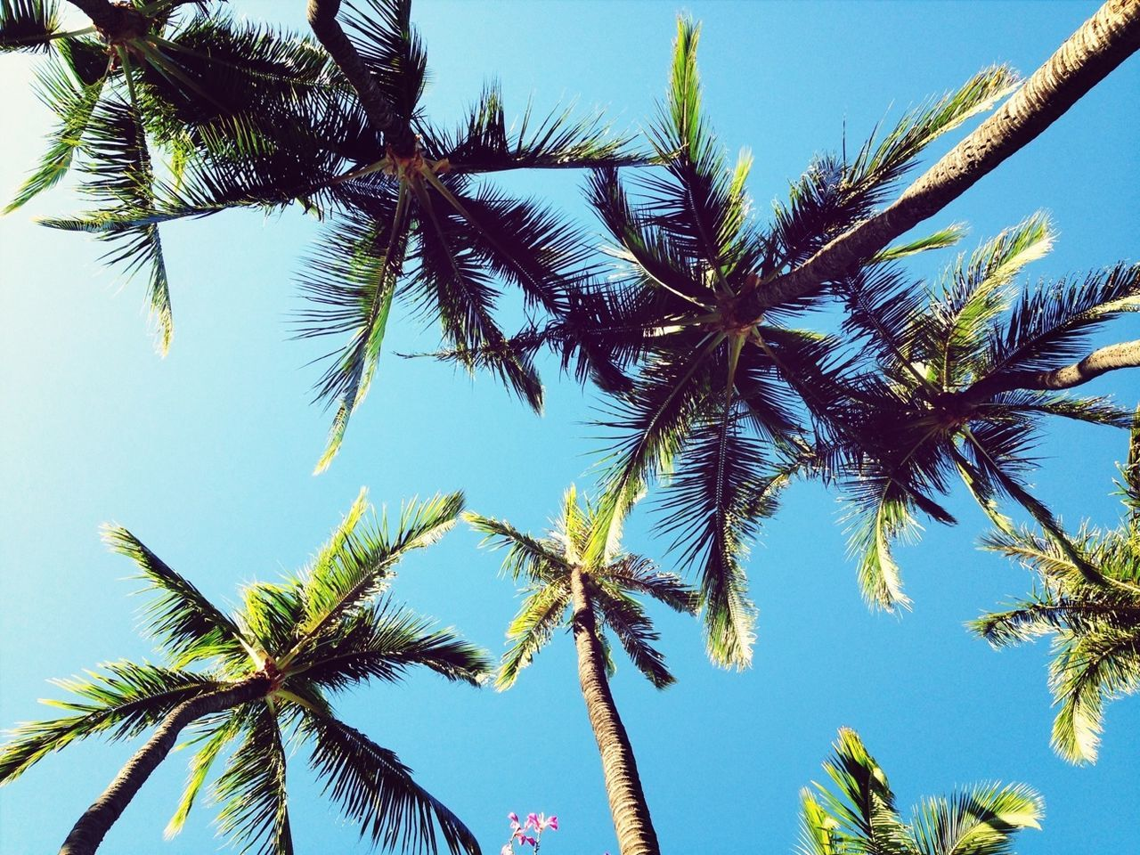 Beautiful stock photos of hawaii, Beauty In Nature, Blue, Clear Sky, Coconut Palm Tree
