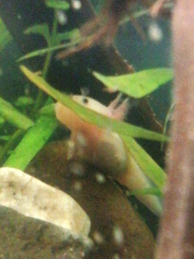 Axolotl Artvark Studio
