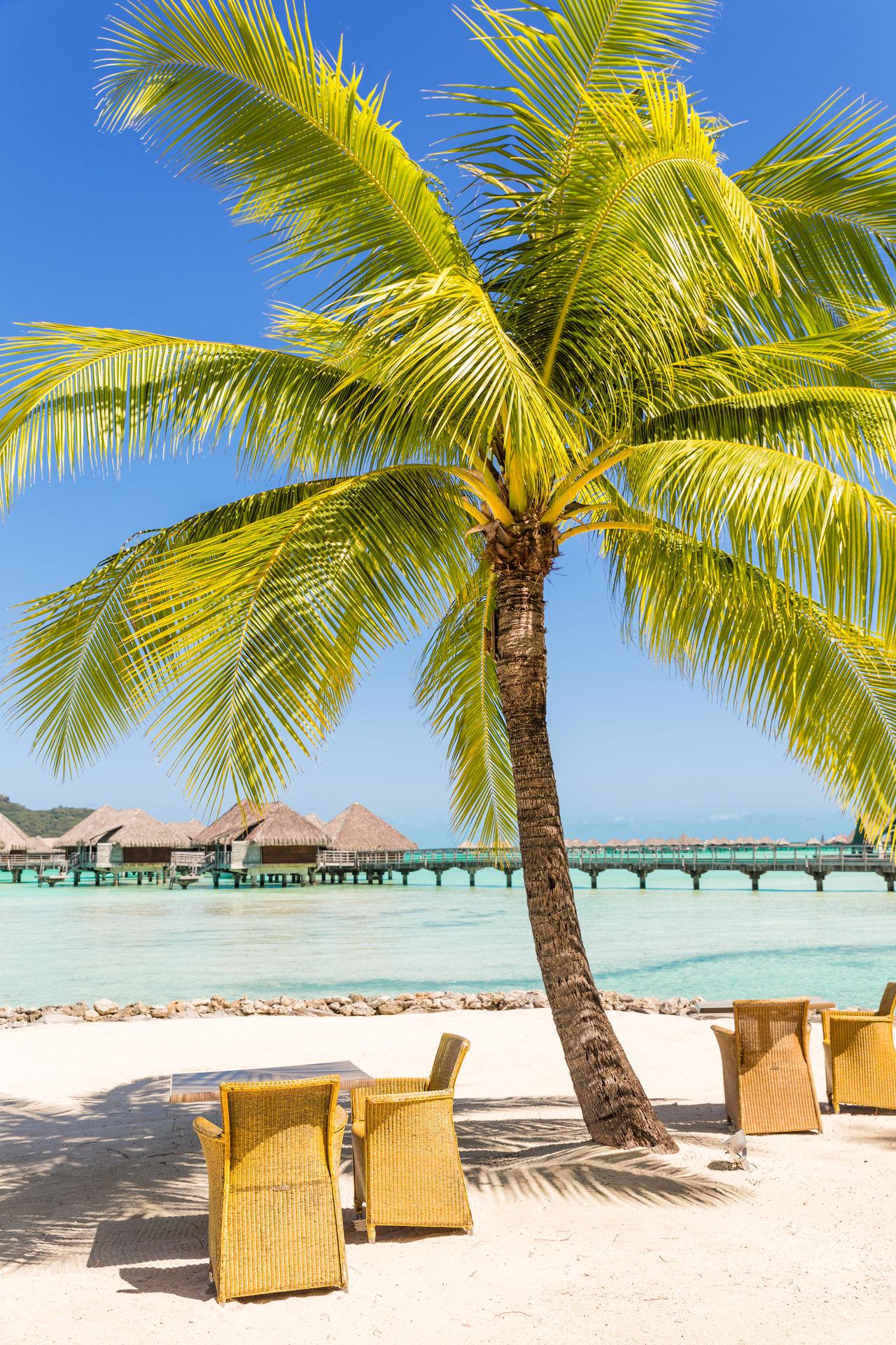 Beautiful stock photos of bora bora, sea, palm tree, blue, beach
