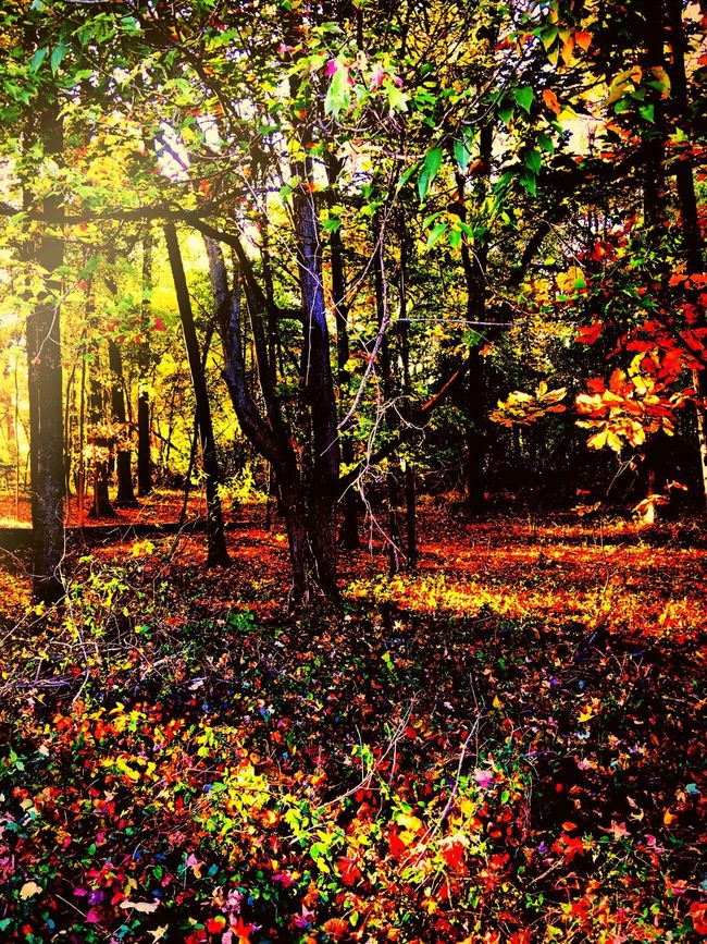 Woods in all its glory Nature Flower Beauty In Nature Growth Tree Sunlight Outdoors Multi Colored Tranquil Scene Tranquility Leaf Day Autumn Freshness Camerafilters Colorphotography Fall Beauty Fallfoliage Iphonephotography