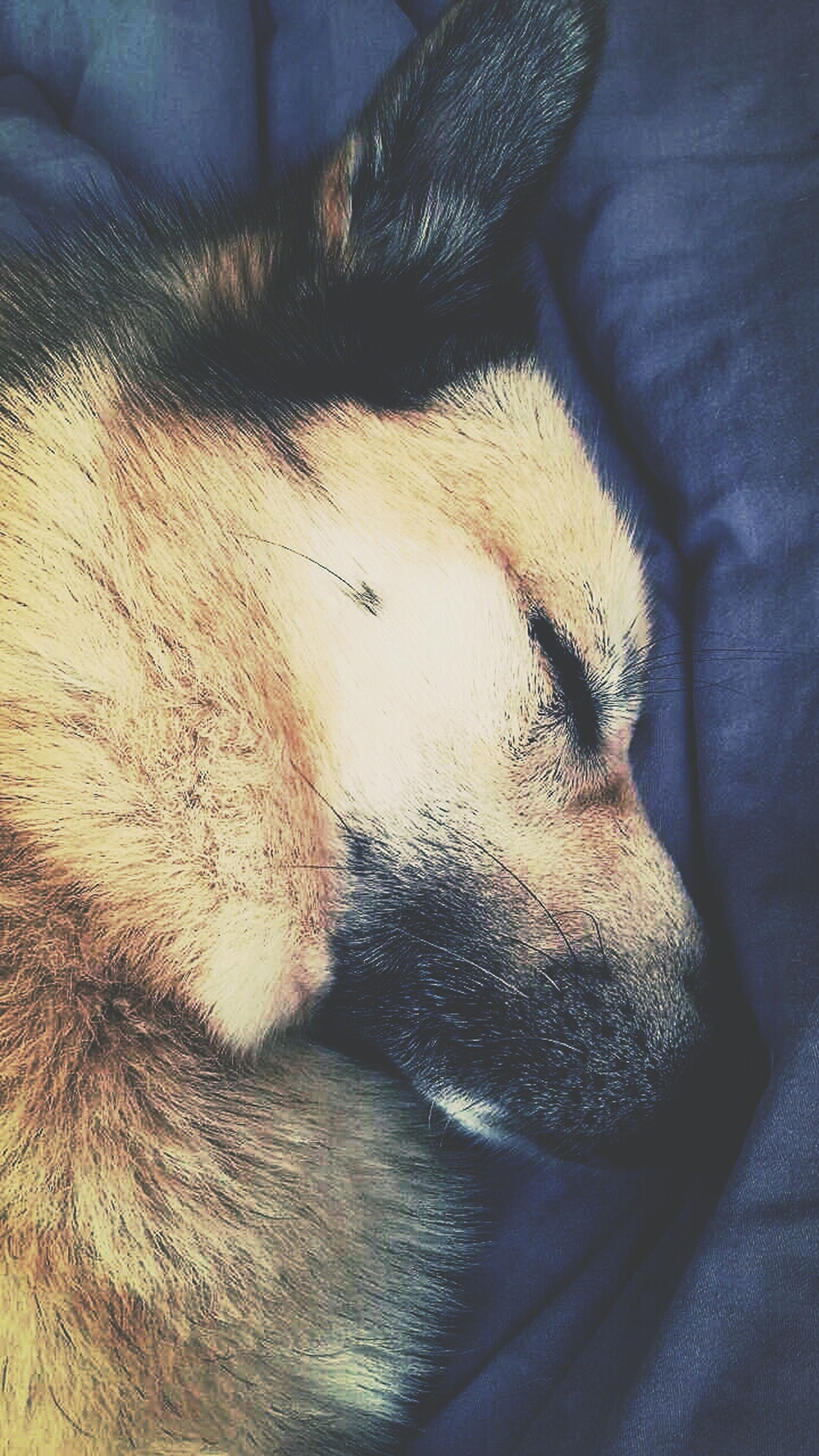 domestic animals, mammal, one animal, animal themes, indoors, pets, part of, close-up, dog, relaxation, sleeping, animal body part, person, cropped, unrecognizable person, high angle view, low section