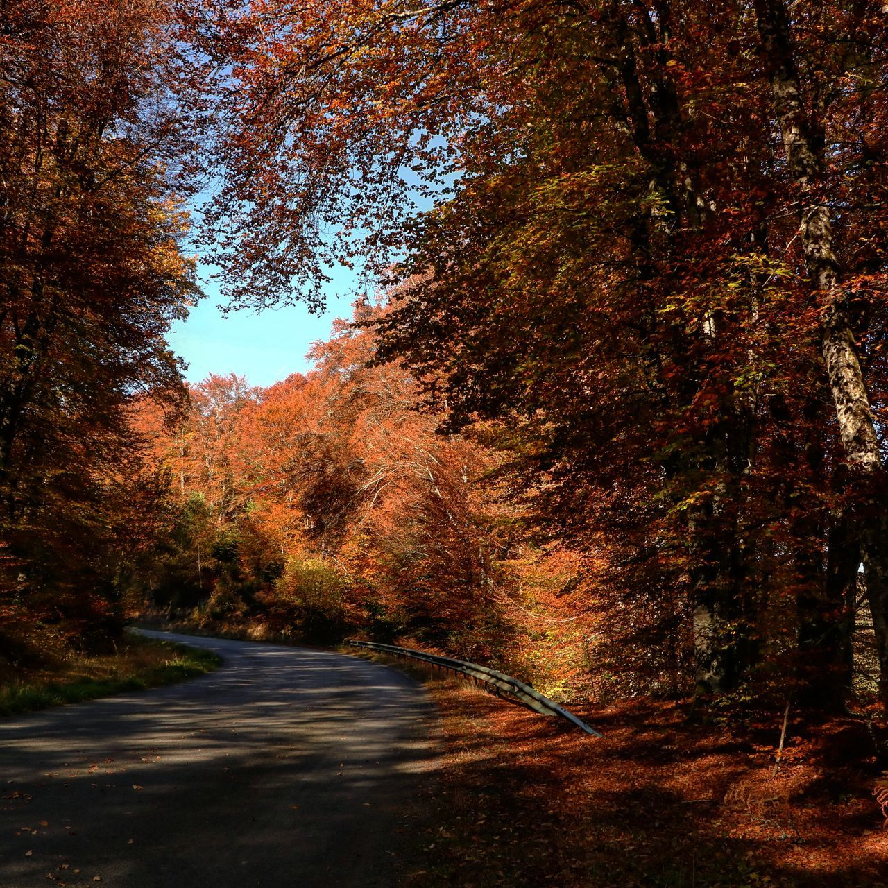 Route d'automne No People Nature Tree Outdoors Sky Day Beauty In Nature Orange Color Non-urban Scene Nature Tranquility Scenics Canonphotography Leaf Turns Red And Yellow Leafscape Leafseason Leafs Start To Fall Leafsporn