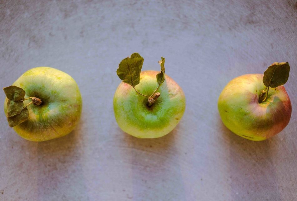 Fall Beauty Apples from a Little tree 🍏🍎🍏at Sunset 😚 Sunset Silhouettes Fall Colors EyeEm Nature Lover Nature Vitamins Healthy Food