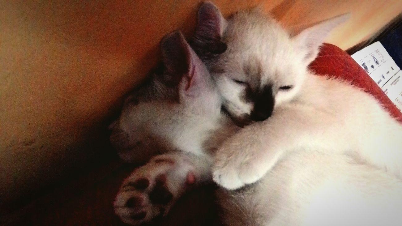 Life Pets Kitties Enjoying Life Taking Photos Relaxing Don't Disturb Me Love love
