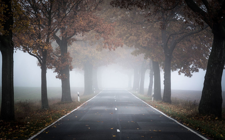 trees and fog and road Autumn Autumn Colors Beauty In Nature Branch Day EyeEm Best Shots Mystery EyeEm Nature Lover Fog Growth Landscape Landscapes With WhiteWall Leaves Long Exposure Long Goodbye Nature No People Outdoors Road Symmetry The Way Foward Tree Vanishing Point The Secret Spaces