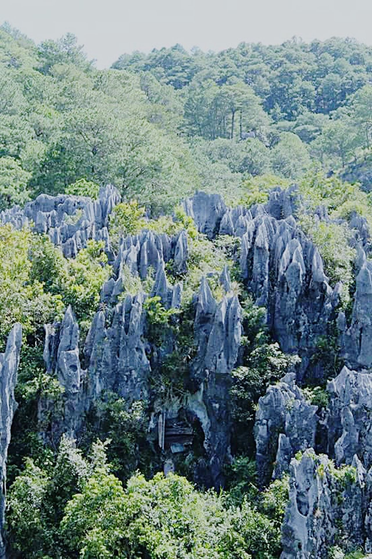 Rock Formation Beauty In Nature Nature Tree Rock Rocky Sagada Adventure