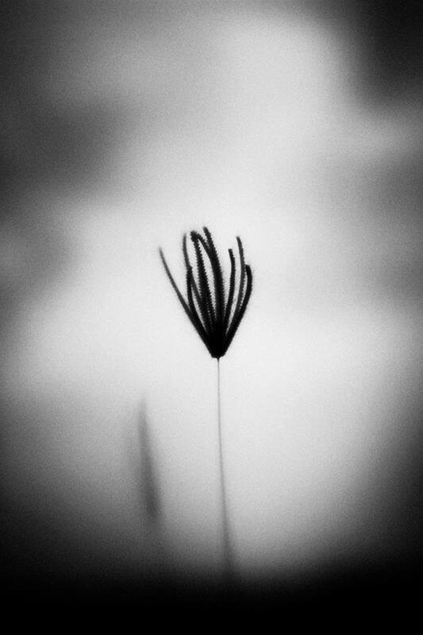 no people, flower, fragility, close-up, indoors, day