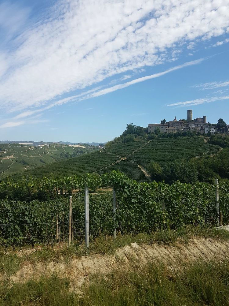 No People Sky Day Outdoors Nature Castiglione Falletto Castle Langhe Travel Destinations Langhe Italy Piedmont Italy Vineyards  Freshness Growth Agriculture Cloud - Sky Beauty In Nature