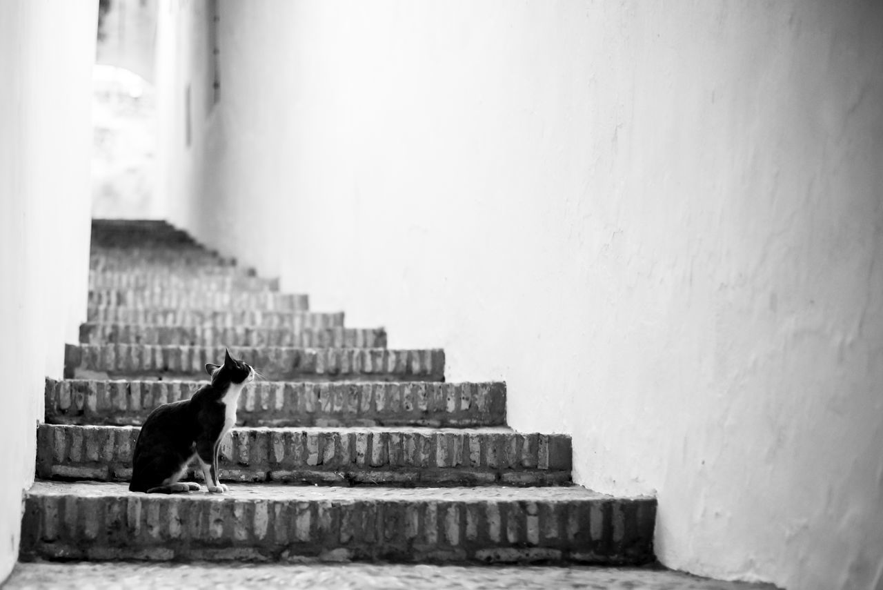 Animal Themes Black And White Black And White Photography Built Structure BYOPaper! Cat Day Dog Domestic Animals Domestic Cat Mammal No People One Animal Outdoors Pets Stairs Steps The Architect - 2017 EyeEm Awards The Great Outdoors - 2017 EyeEm Awards