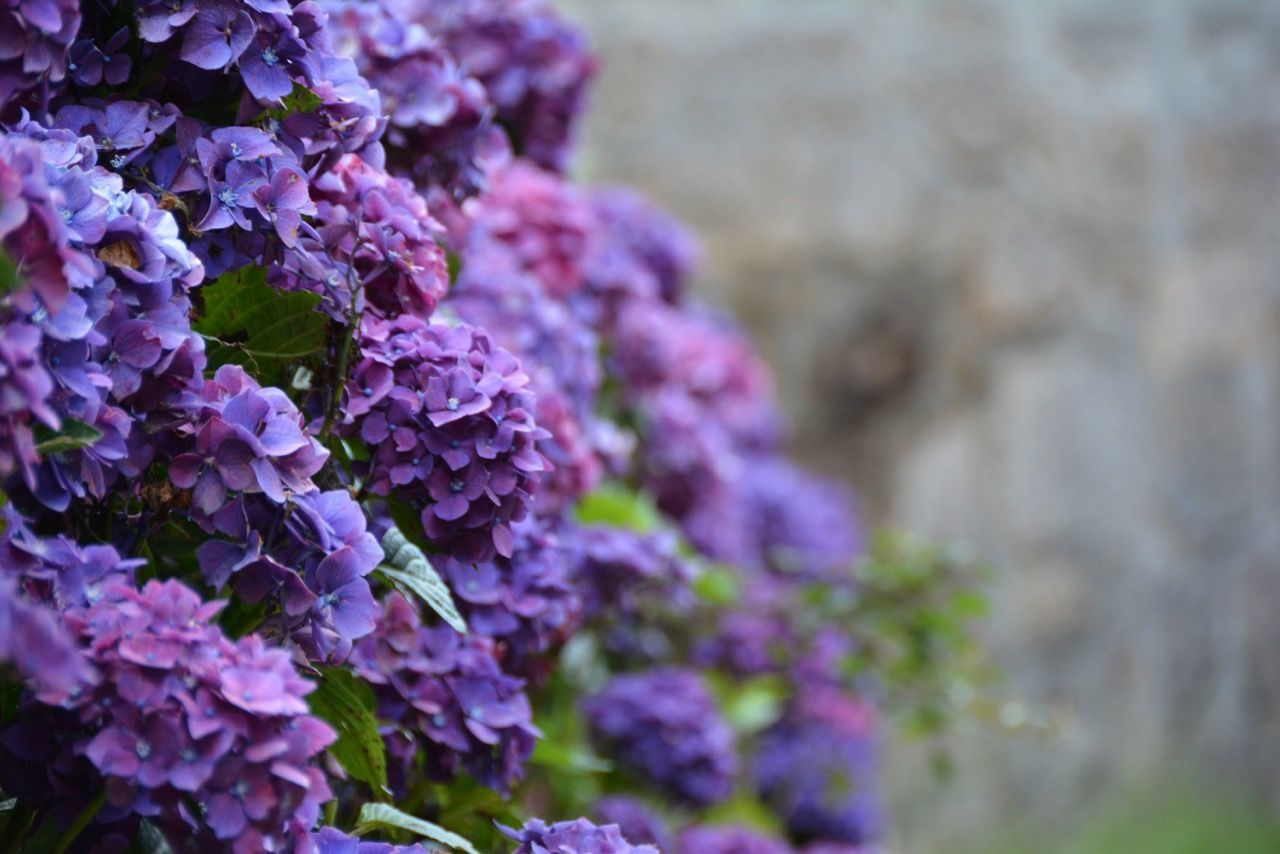 EyeEm Nature Lover Flowers The Flowers Series EyeEm Best Shots The Week On EyeEm From The Rooftop