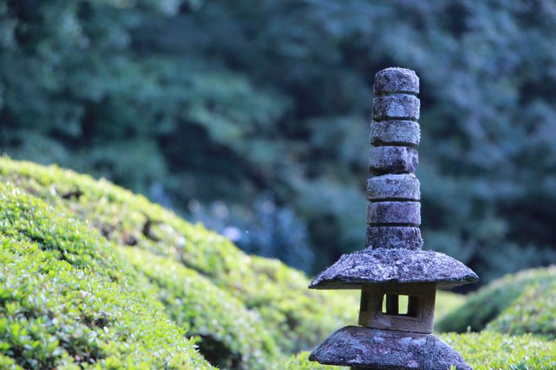 Relaxing Check This Out Kyoto Kyoto, Japan Shisendo Nature Green 詩仙堂 Object Ultimate Japan