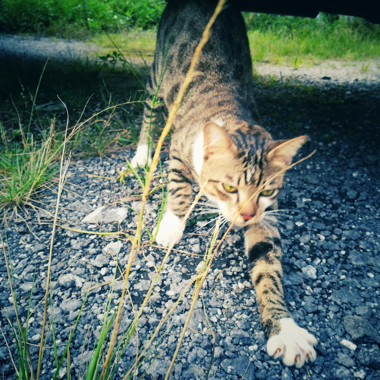 Wild cat. One Animal Animal Themes Domestic Cat Mammal Domestic Animals Pets Kitten Outdoors Huaweiphotography No People Hua Wei P9 Plus Homelessness  HuaweiP9 Animal Huawei P9 Plus HuaweiP9Photography Homeless Cats Cat Homeless Homeless Animal Animalphotography Homeless Kitten Homeless Cat Homelessness