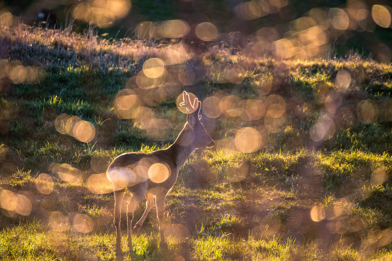 Animal Themes Animal Wildlife Animals In The Wild Beauty In Nature Day Domestic Animals Grass Mammal Nature No People One Animal Outdoors Tree