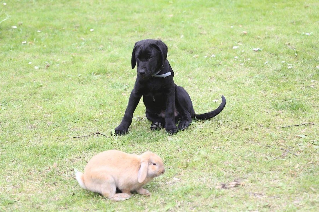 Dog Rabitt Dog And Rabitt