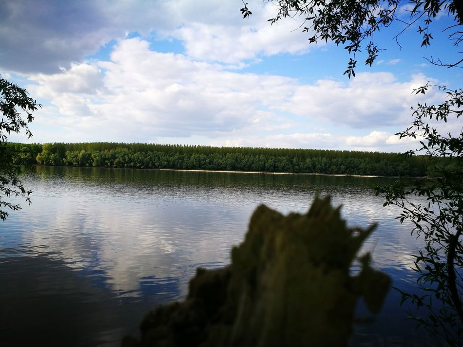 Cloud - Sky Tree Water Reflection Nature Bird Tranquility Beauty In Nature Danube EyeEmNewHere Enjoying The Sun 😎❤❤❤👊