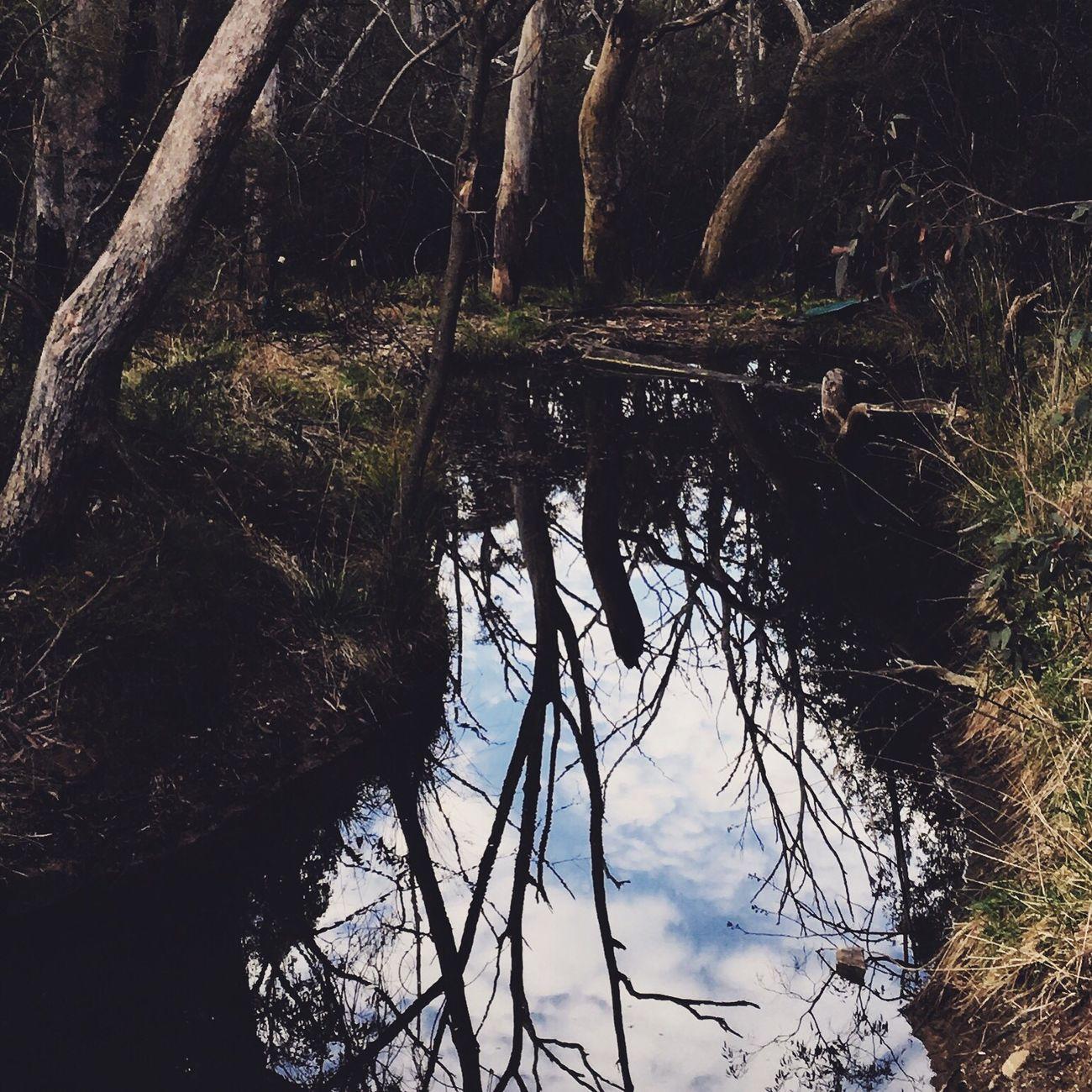 Reflection WoodLand No People Nature