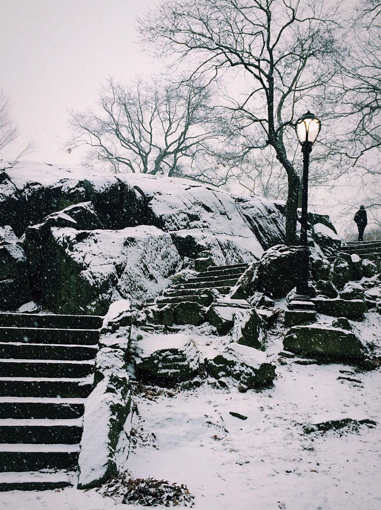 Winter in Central Park Deepfreeze