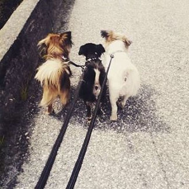 DoggyLove Instadogs Threeamigos Follow4follow Like4like Bestfriends Sendadogphoto