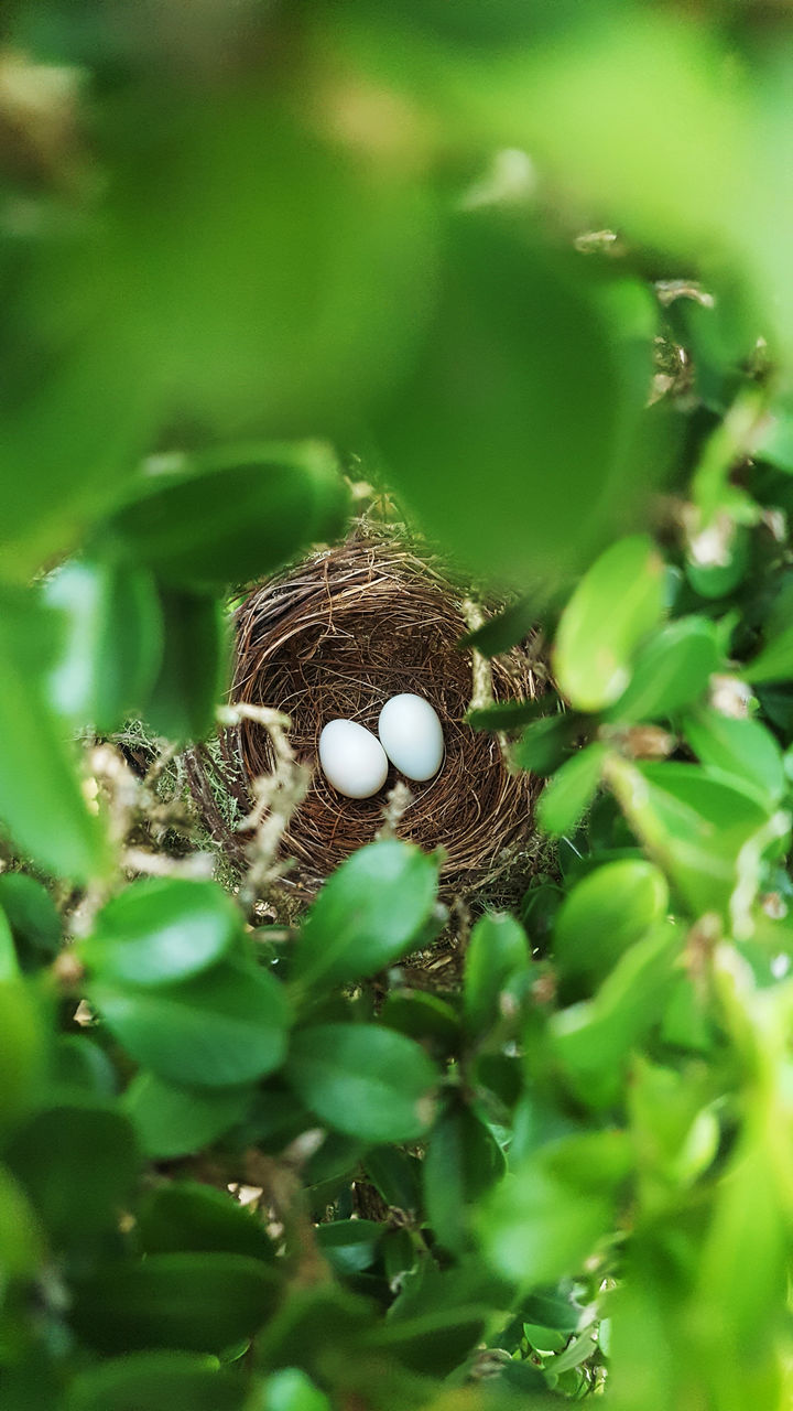 High Angle View Of Eggs In Nest Seen Through Branches