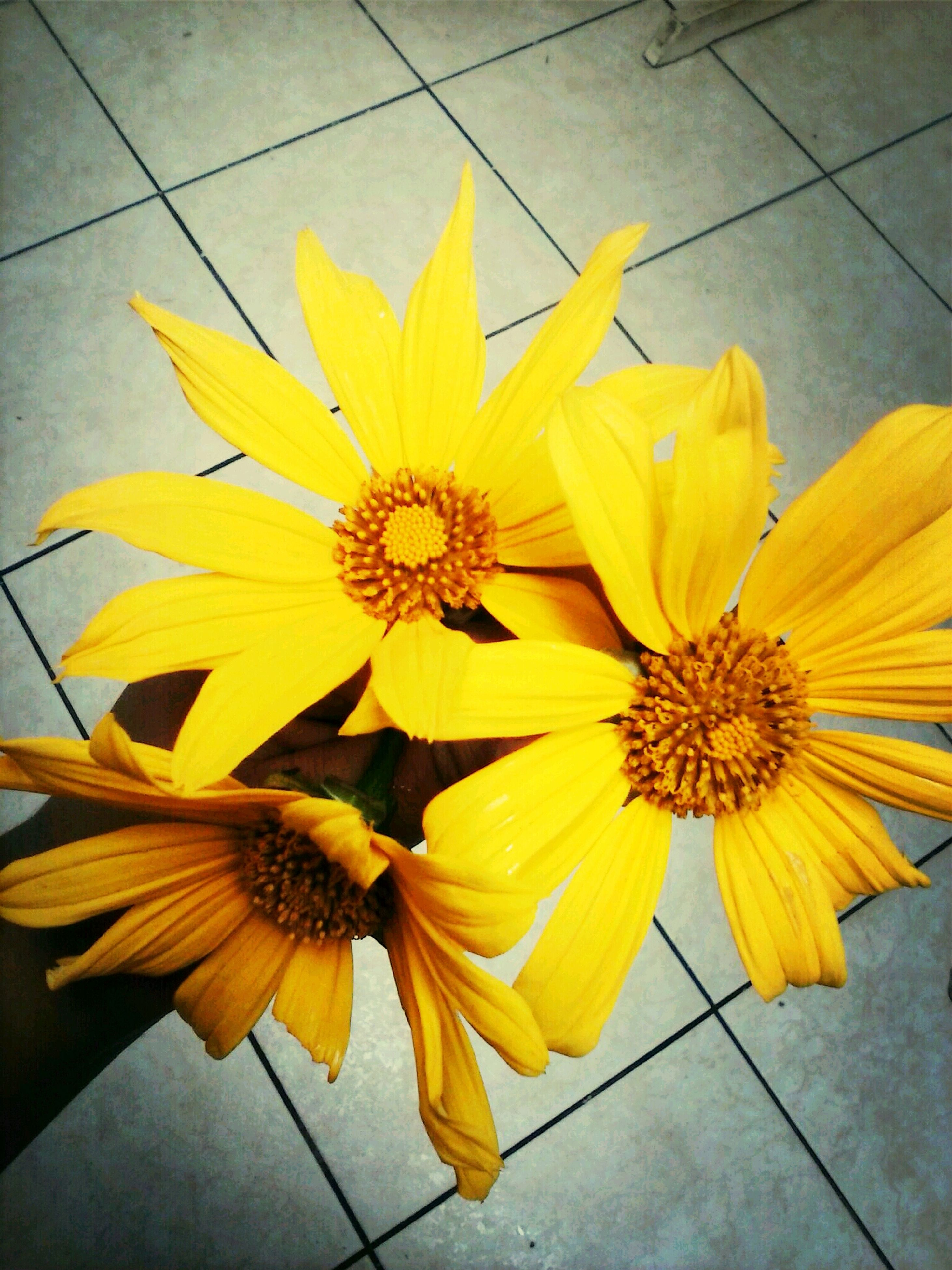 yellow, flower, petal, freshness, fragility, flower head, high angle view, beauty in nature, close-up, indoors, plant, nature, growth, blooming, no people, pollen, day, in bloom, leaf, vibrant color