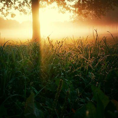 Morning First Eyeem Photo