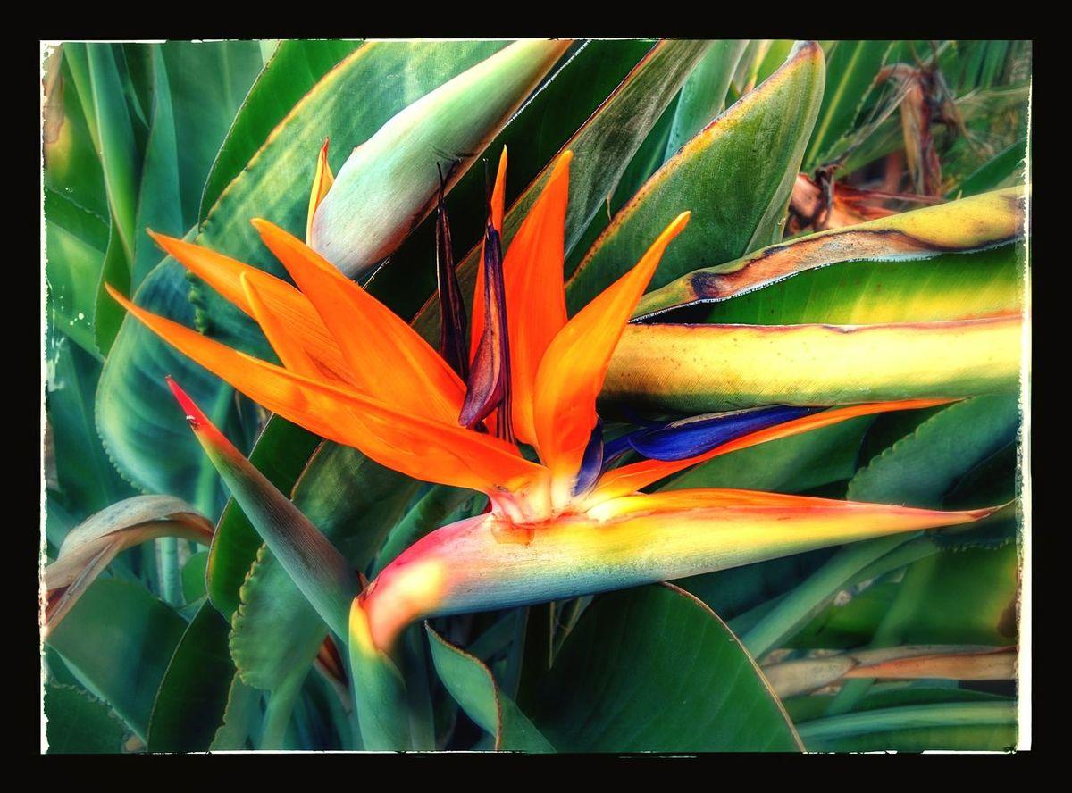 Birds in the area Flowers 🌷 Flowers 🌹 Taking Photos Googlecamera Birdofparadise Flower