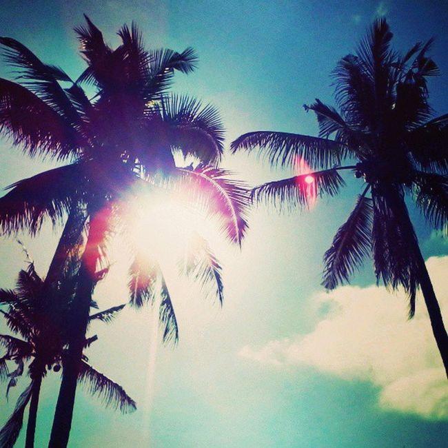 Navitas Beach Coconut Trees