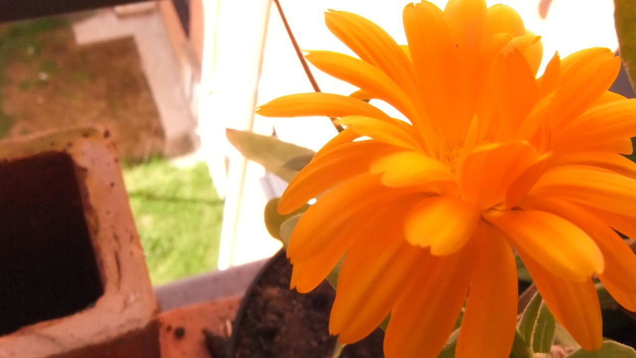 orange color, flower, nature, beauty in nature, close-up, fragility, freshness, no people, growth, petal, flower head, plant, day, outdoors, animal themes