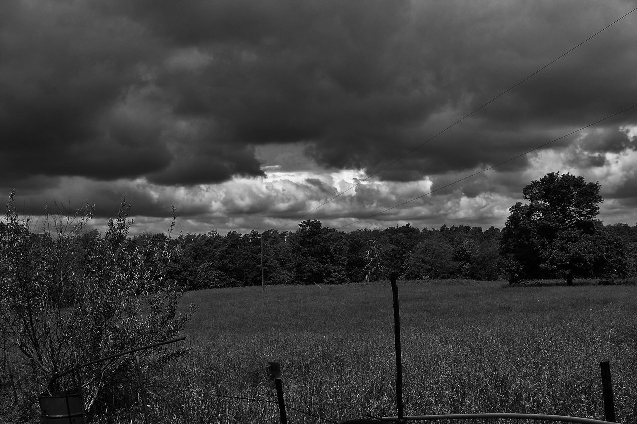tree, nature, sky, cloud - sky, tranquility, growth, field, scenics, landscape, beauty in nature, no people, outdoors, tranquil scene, agriculture, day, storm cloud, rural scene