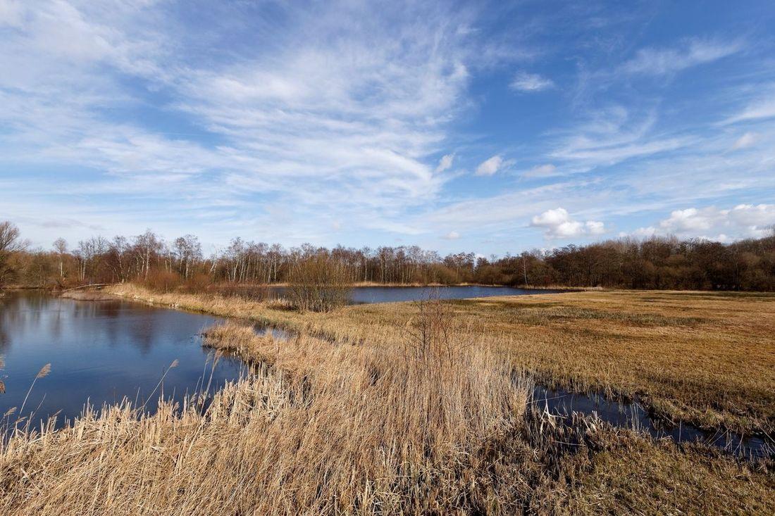 Clickclackin Clouds And Sky Dutch Landscape Reeds Whats Next? Waterscape Blue Sky