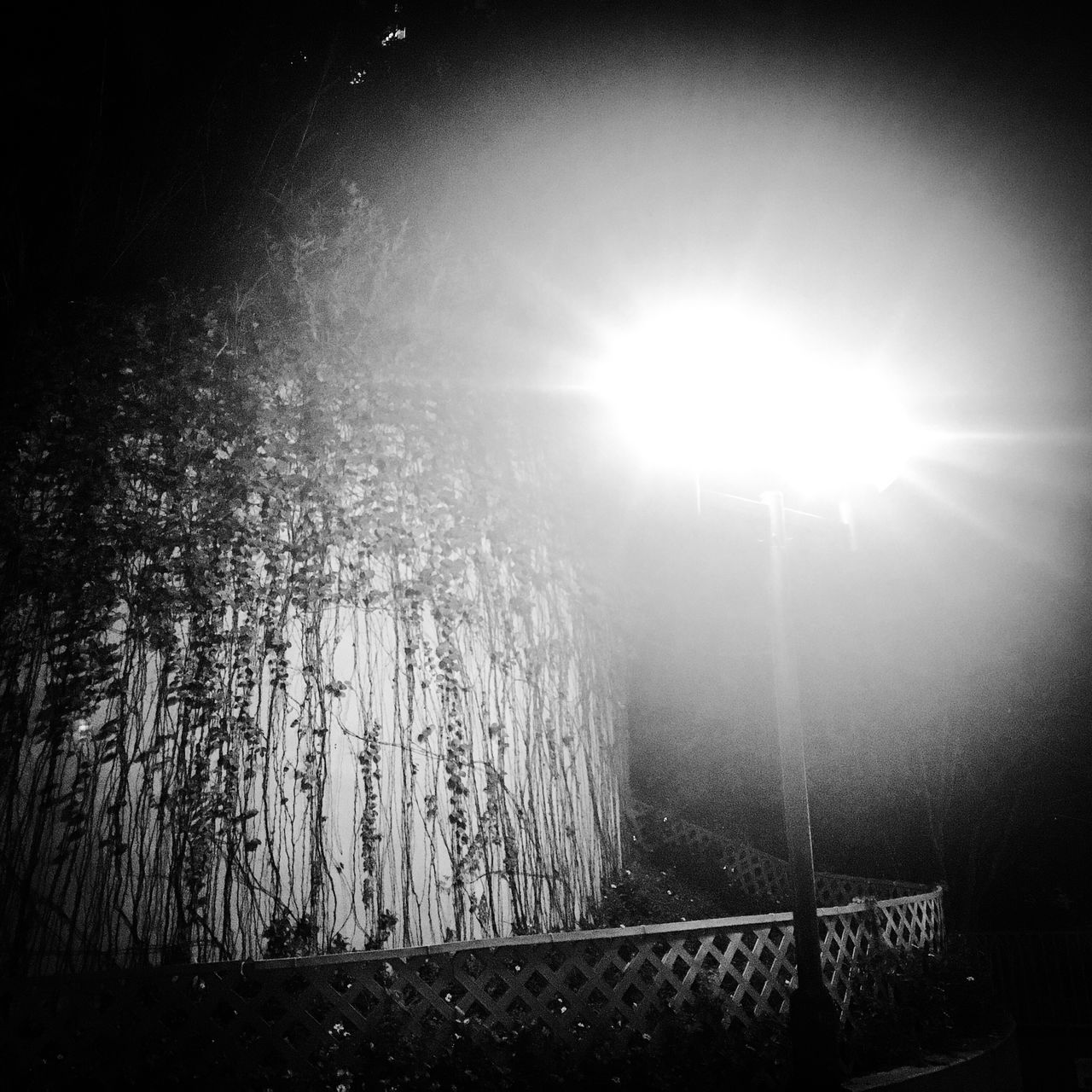 Streetphotography Streetphoto_bw Nightphotography Night Lights Light Pole Flare Flarelight Plant Wall Nature Art Lens Flare Beauty In Nature Tranquility Scenics Tranquil Scene Outdoors No People Silence Blackandwhite Monochrome Fence Low Key Photography