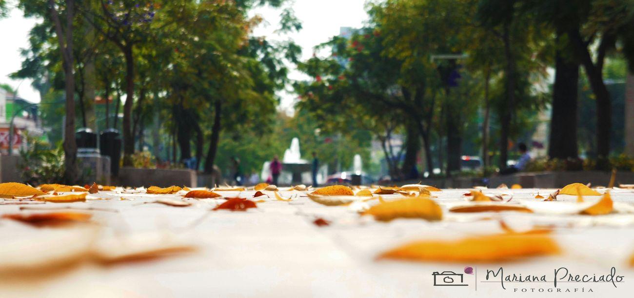 En la simpleza , se puede encontrar cosas maravillosas .... Photography Street Photography Travel Photography Urbanphotography ChapultepecGdl Urbanphotograpy Eyeem Guadalajara Meetup