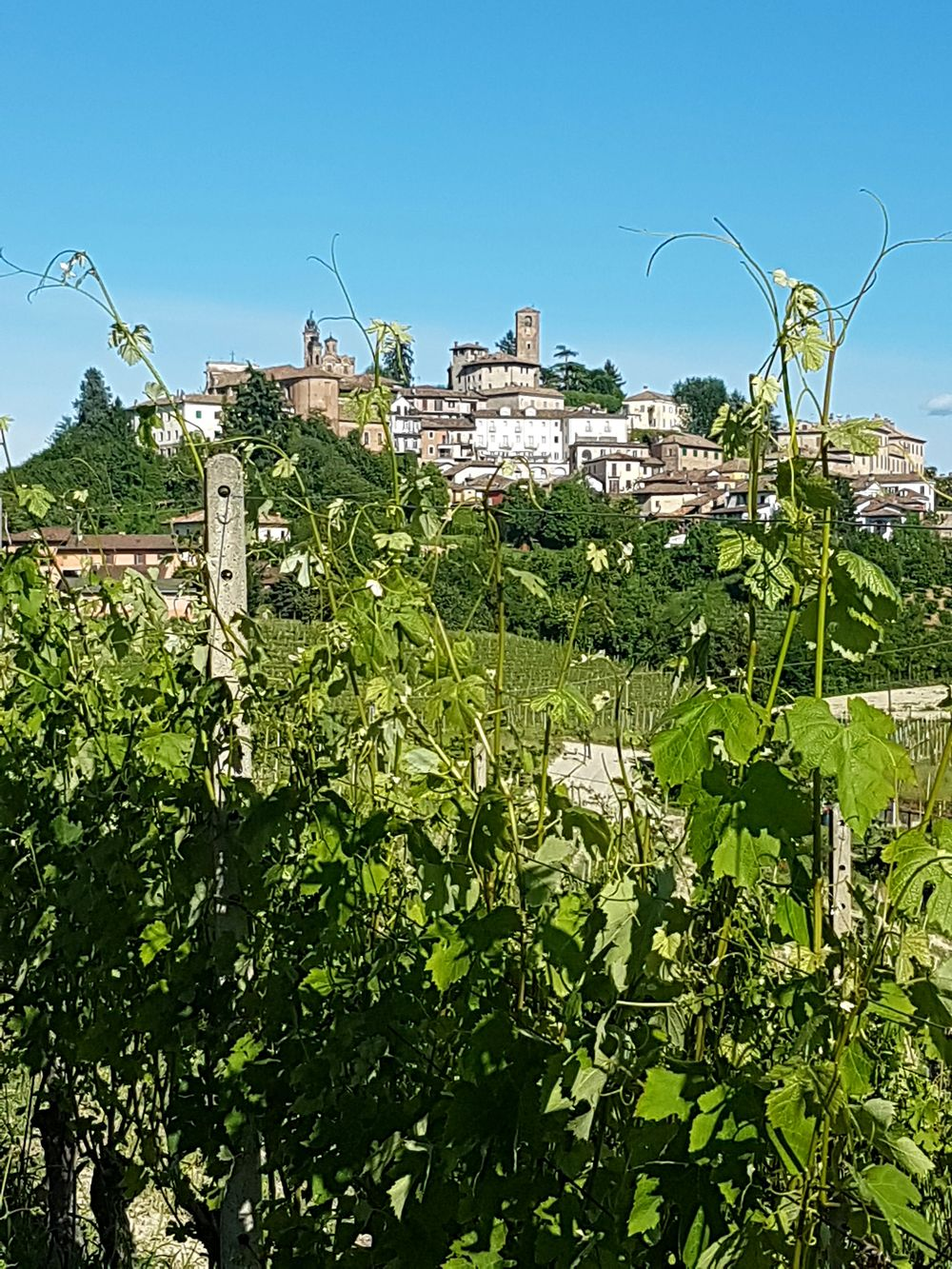 No People Outdoors Sky Agriculture Day Rural Scene Building Exterior Architecture Langhe Piedmont Italy Vineyard Travel Destinations Italy Landscape Borghipiúbelliditalia