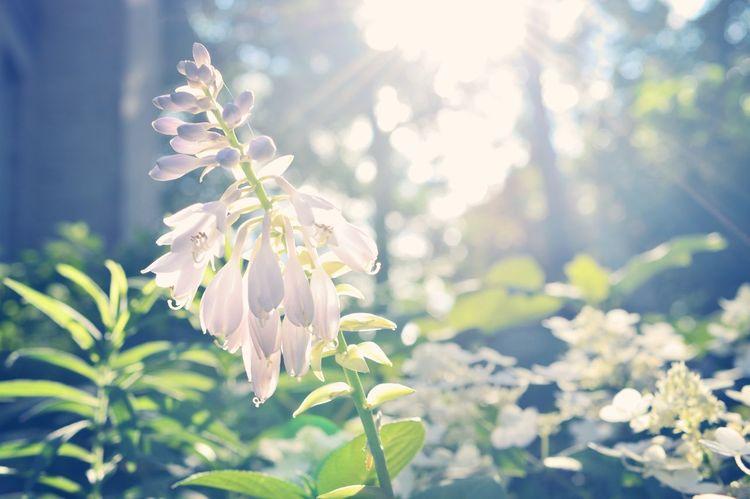 Sunshine on the Garden Flowers
