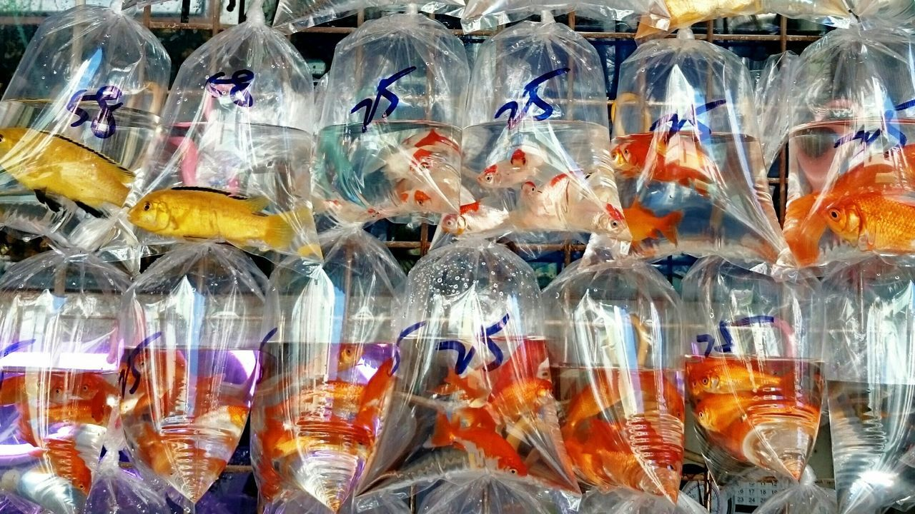 Beautiful stock photos of fish, Animal Themes, Animals In The Wild, Bag, Choice