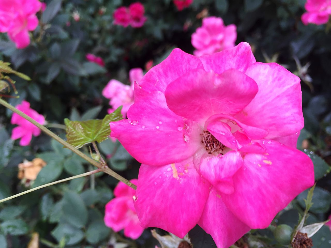 pink color, petal, flower, one animal, insect, animal themes, nature, fragility, animals in the wild, flower head, growth, beauty in nature, animal wildlife, high angle view, outdoors, no people, plant, day, close-up, freshness, blooming