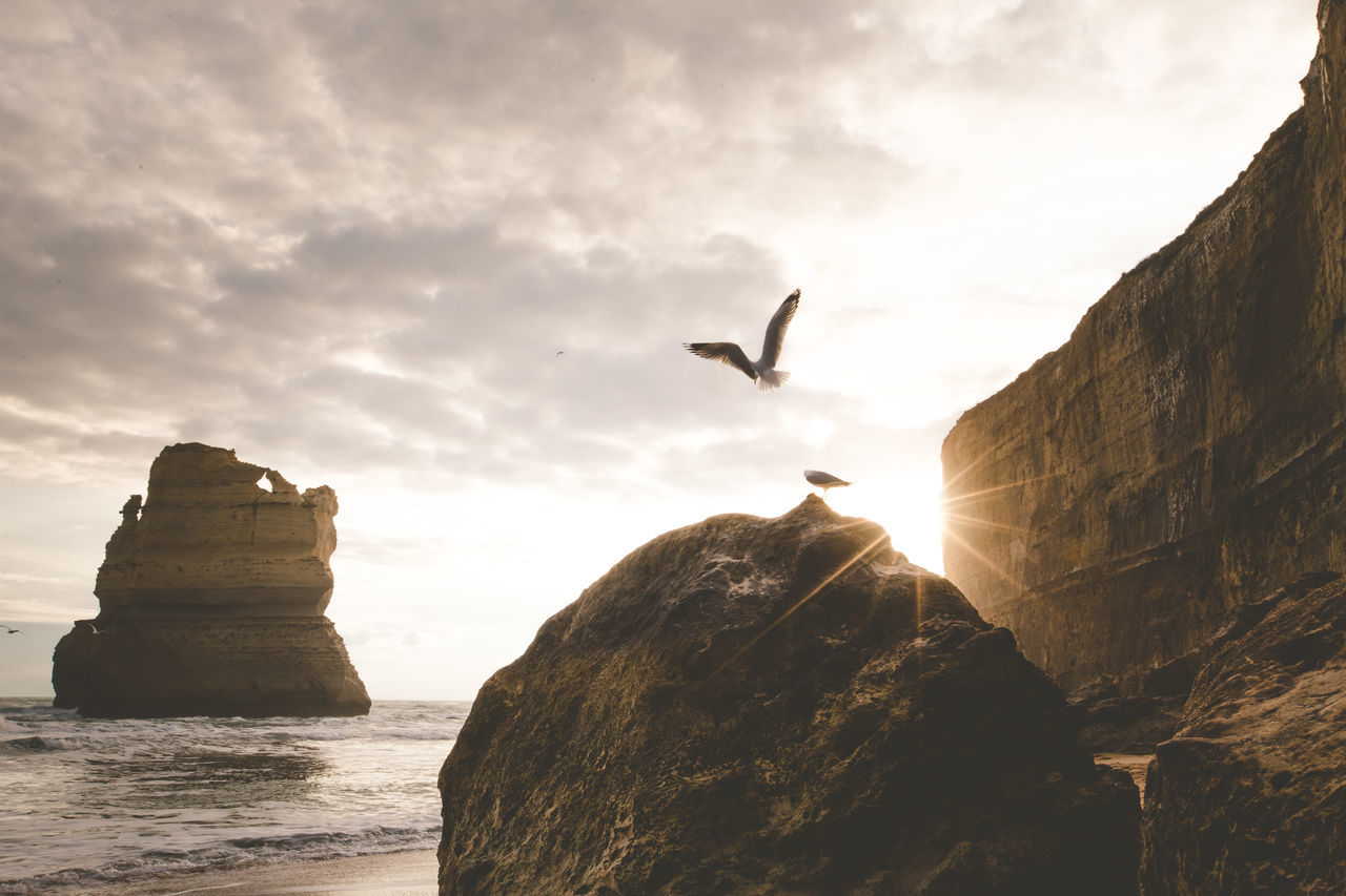 Adventure Bird Day No People Outdoors Rock - Object Scenics Sea Seagull Sunset