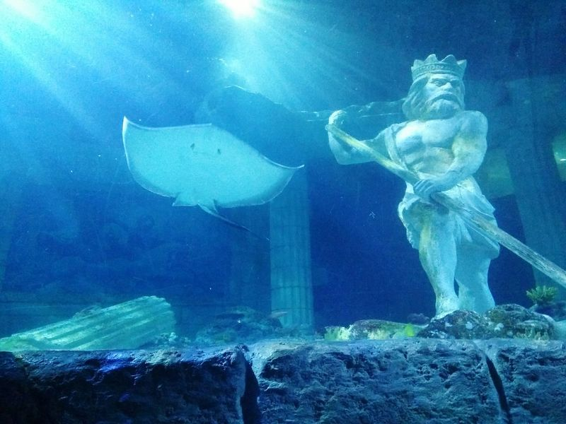 Underwater Swimming UnderSea Water Sea Life Neptuno Neptune Statue Raia OnePlusOne📱 Shotononeplus Oneplus One Oneplusonephotography Onepluslife Portugal Sealifelondonaquarium