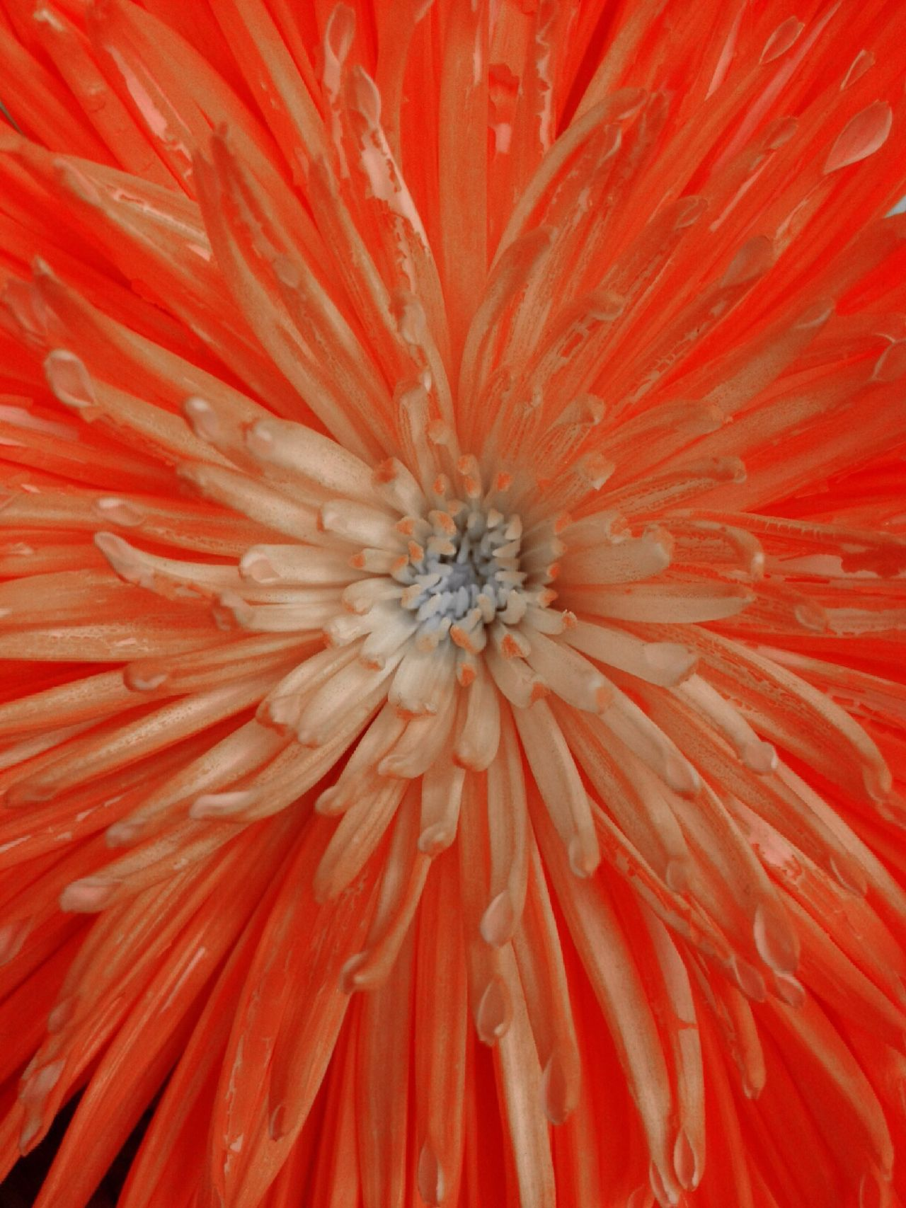Flowerporn Flowers Macro_collection Eye4photography