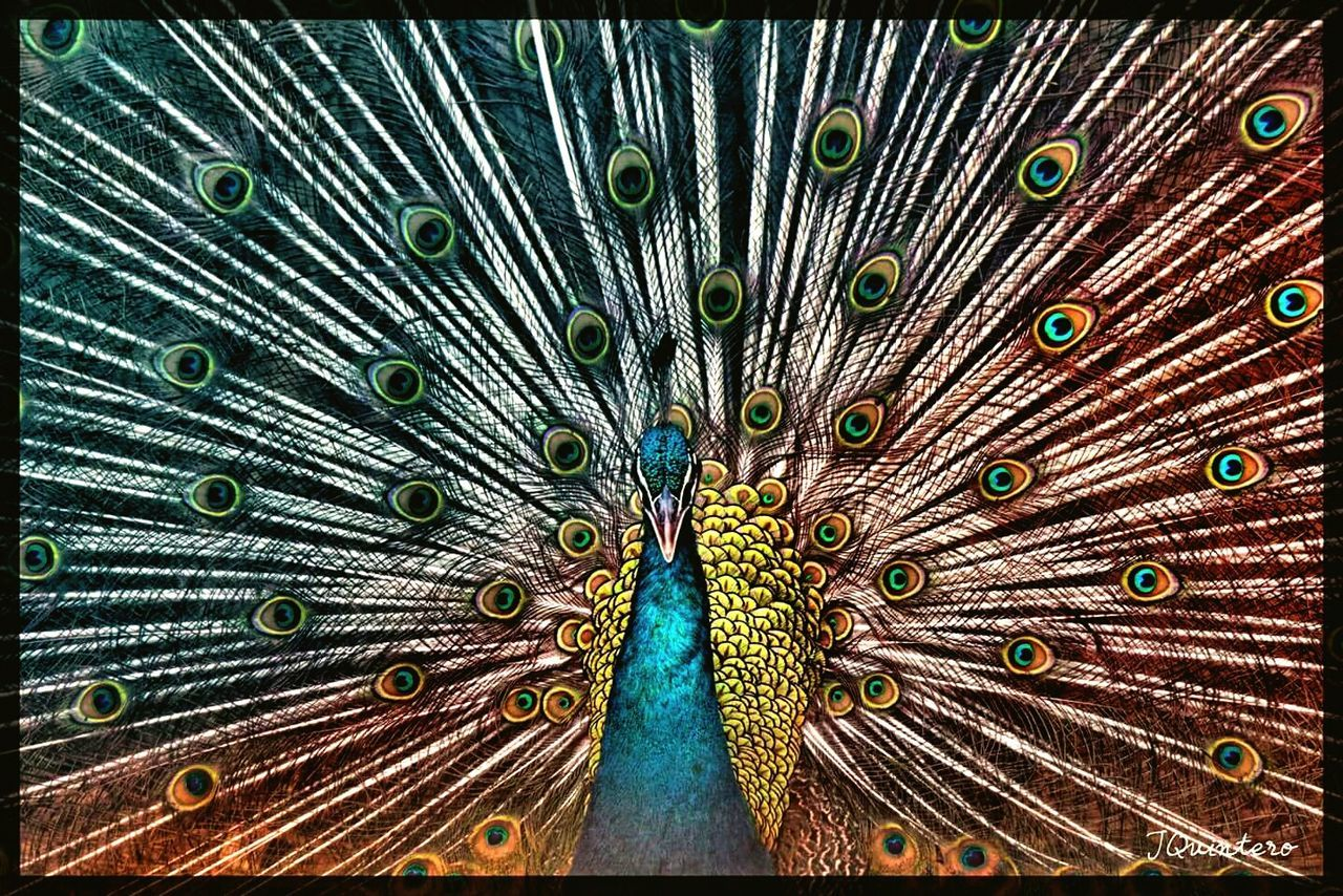Peacock BaluarteNiChavit Vigan Philippines Ilocos Sur