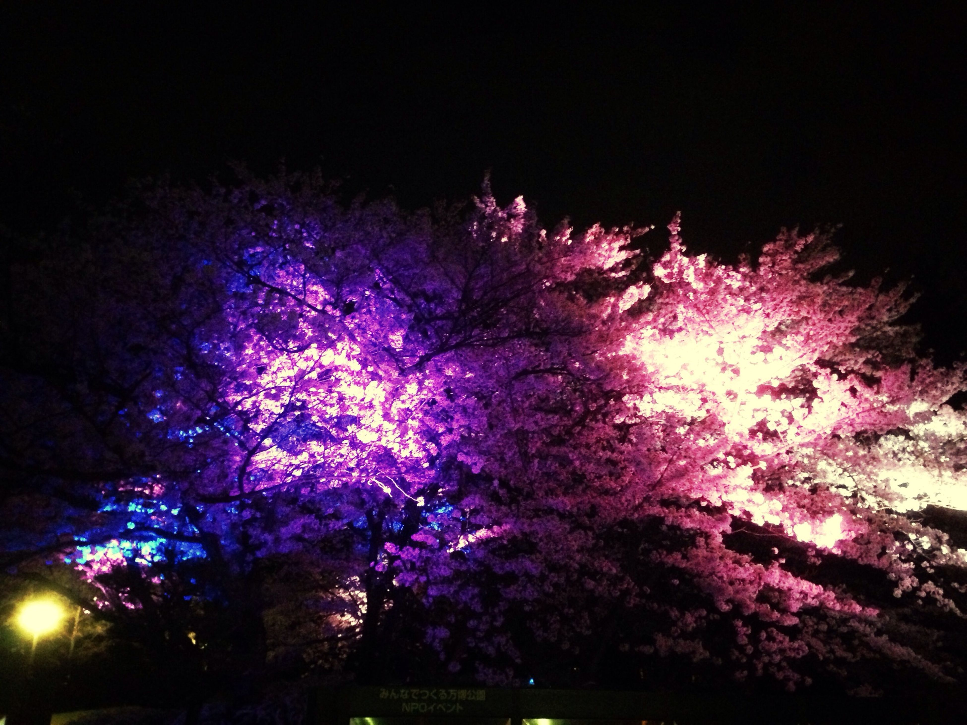 night, illuminated, celebration, tree, firework display, glowing, exploding, long exposure, low angle view, multi colored, firework - man made object, pink color, outdoors, sky, light - natural phenomenon, motion, event, no people, purple, sparks