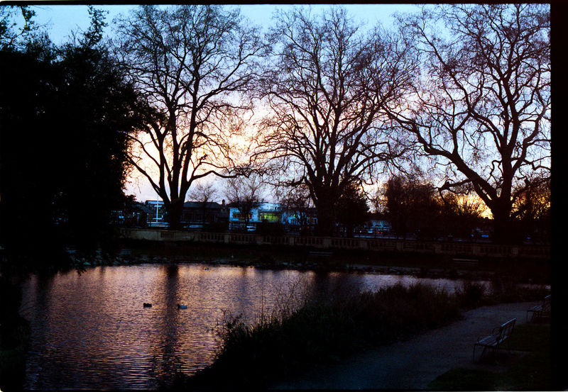 Silhouette of winter trees at sunset Duck EyeEm Best Shots Film Film Photography Filmisnotdead Golden Hour Nikkormat FS (1965) Pond Reflection Showcase March Silhouette Silhouettes Sunset Tadaa Community Taking Photos Tree Trees Walking Around Water Water Reflections