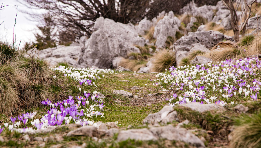 Beauty In Nature Blooming Day Field Flower Fragility Freshness Growth Landscape Nature No People Outdoors Plant Purple Rock Rock - Object Rock Formation Scenics Spring Spring Flowers Springtime Tranquil Scene Tranquility