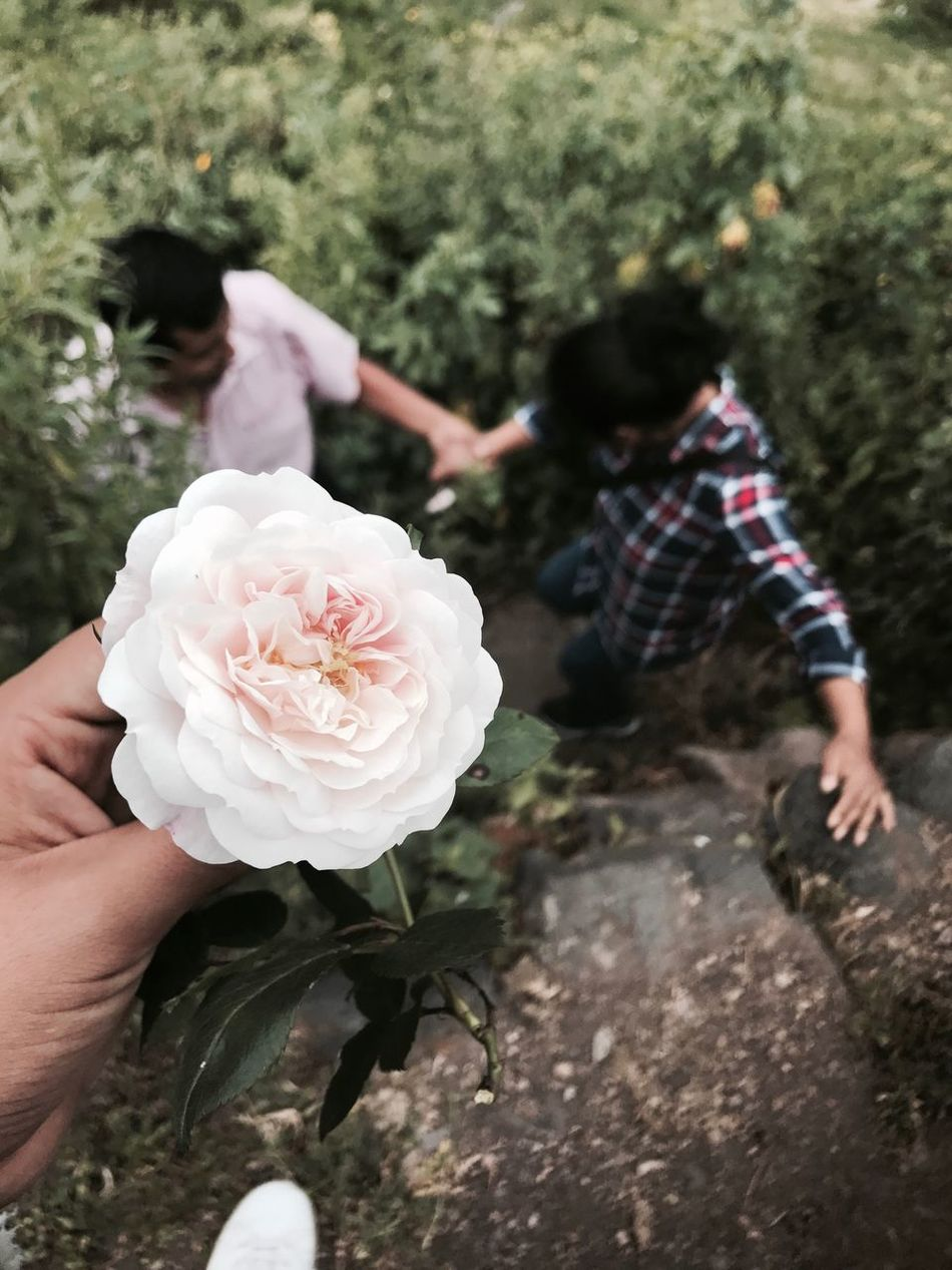 Flower Love Rose - Flower Petal Nature Fragility Human Body Part Beauty In Nature Outdoors Two People Green Color Beauty In Nature Day Plant First Eyeem Photo