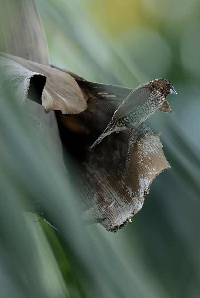 Best place to rest Artistic Beauty In Nature Close-up Feather  Lonely Love Portrait Scaly Breasted Munia Solace